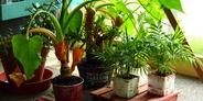 ネイルサロンに観葉植物を置きたい! 育てるコツとおすすめの種類はこれ!