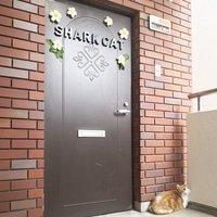 shark-cat